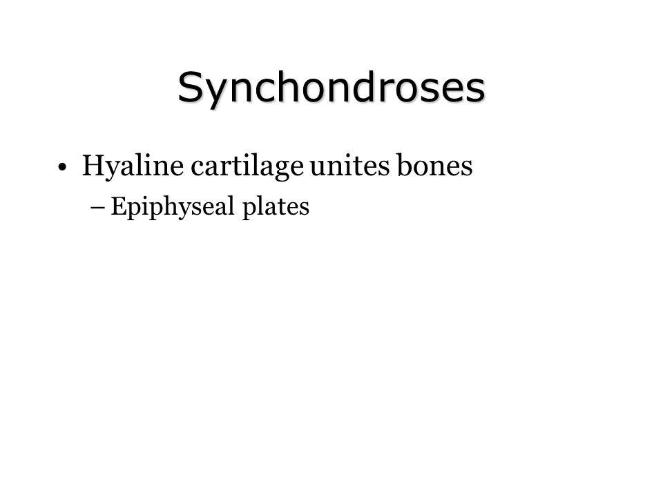 Synchondroses Hyaline cartilage unites bones Epiphyseal plates
