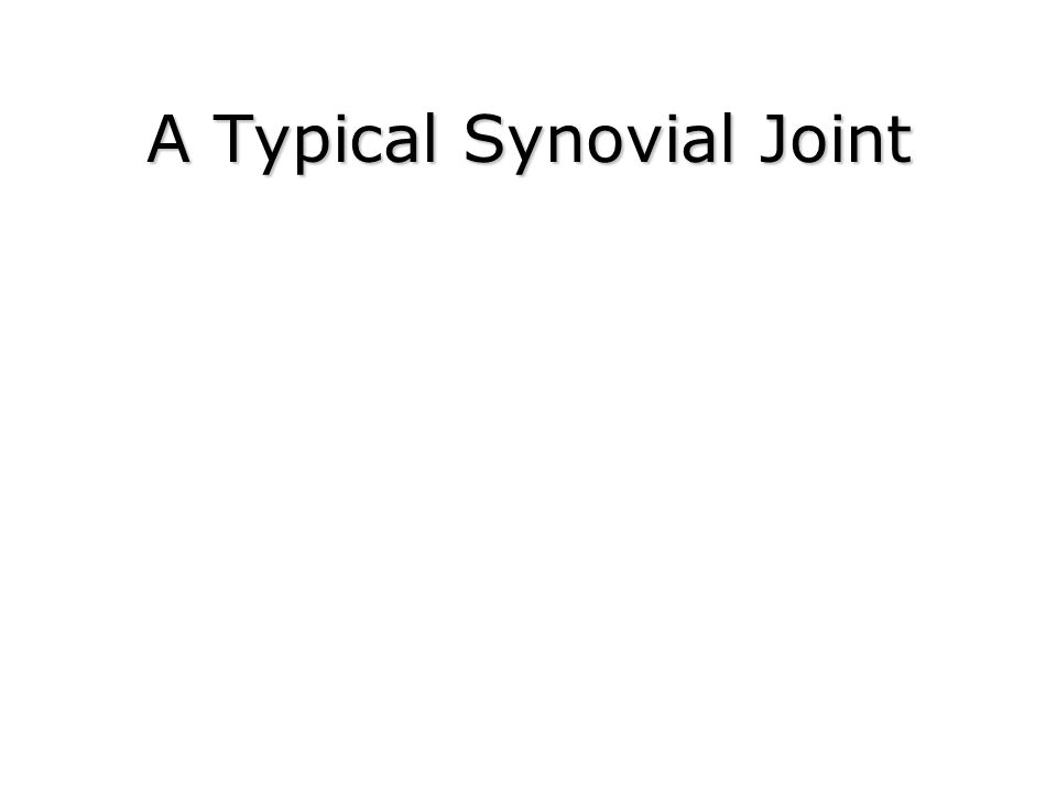 A Typical Synovial Joint