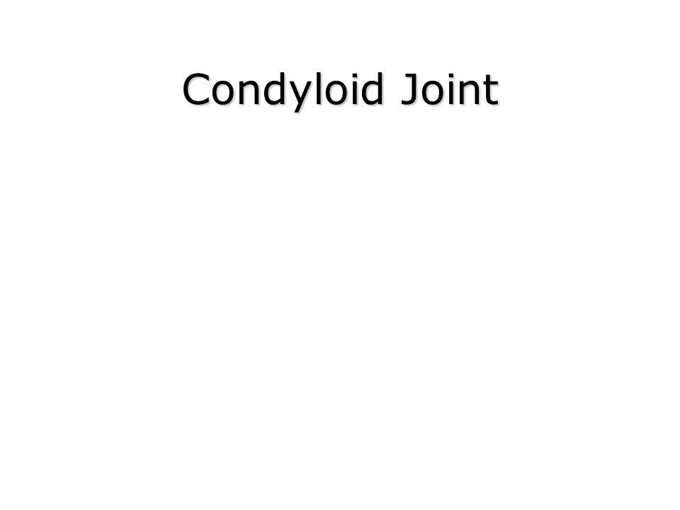 Condyloid Joint