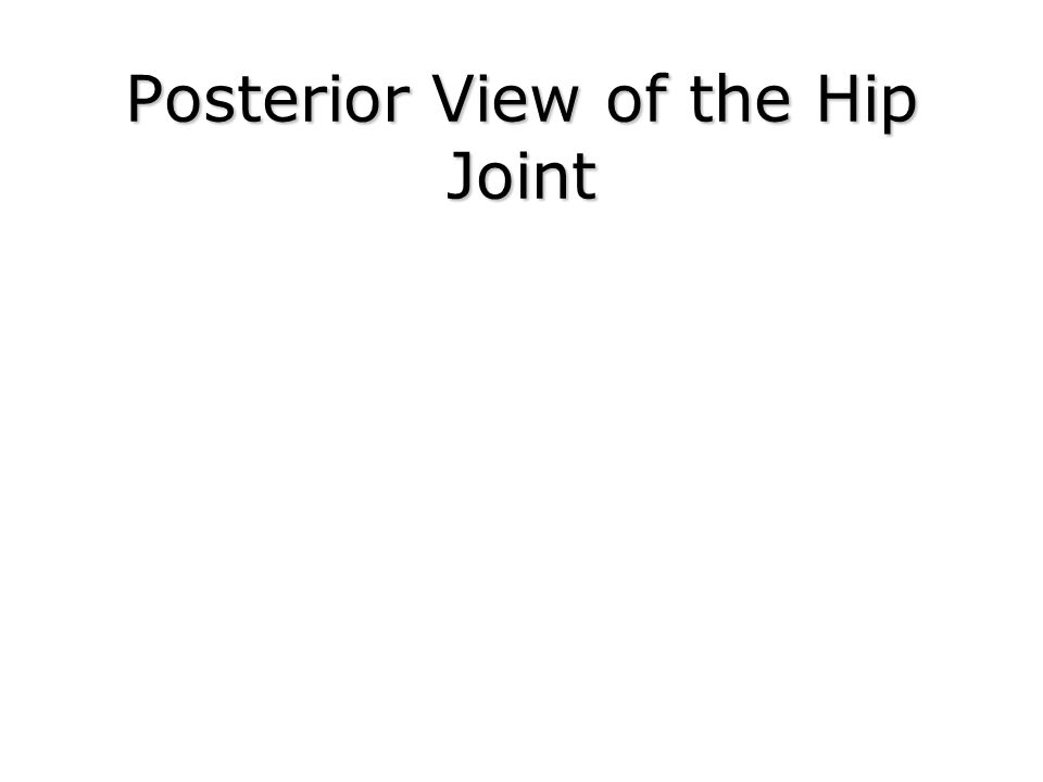 Posterior View of the Hip Joint