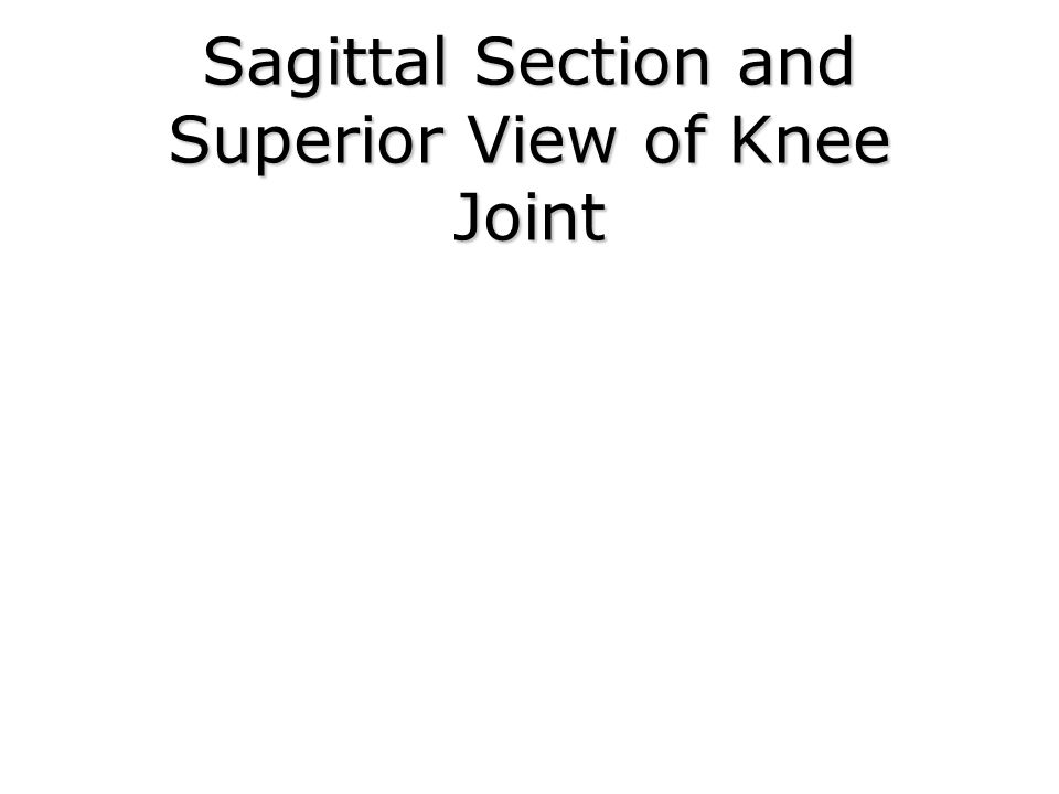 Sagittal Section and Superior View of Knee Joint