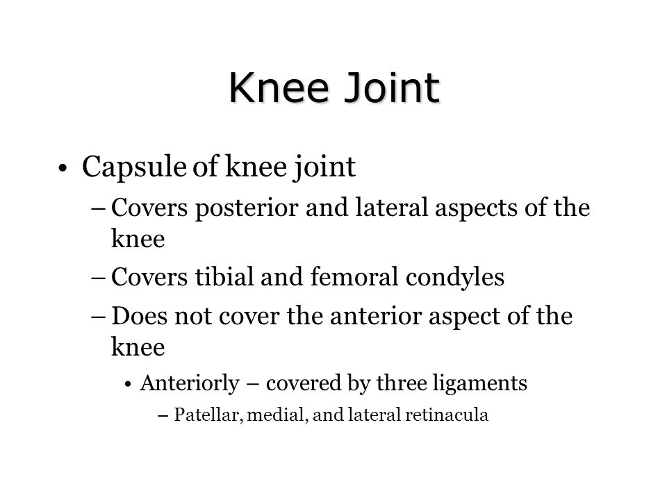 Knee Joint Capsule of knee joint