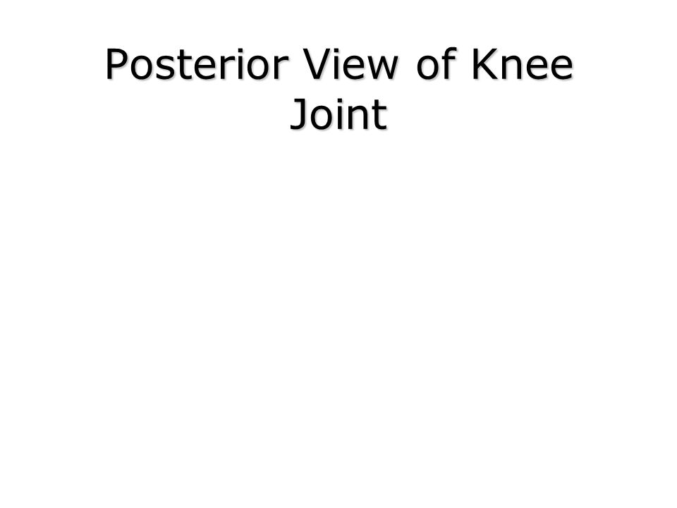 Posterior View of Knee Joint
