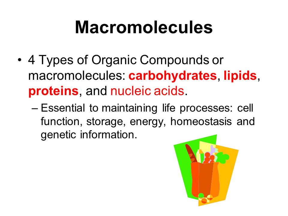 Macromolecules 4 Types of Organic Compounds or macromolecules: carbohydrates, lipids, proteins, and nucleic acids.