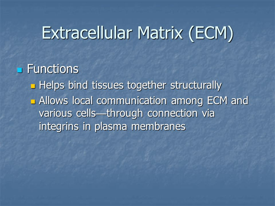 Extracellular Matrix (ECM)