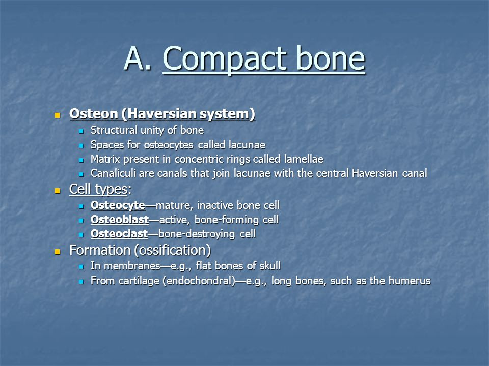 A. Compact bone Osteon (Haversian system) Cell types: