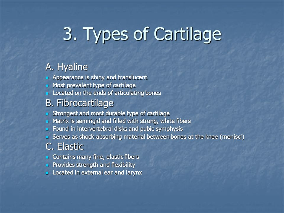3. Types of Cartilage A. Hyaline B. Fibrocartilage C. Elastic