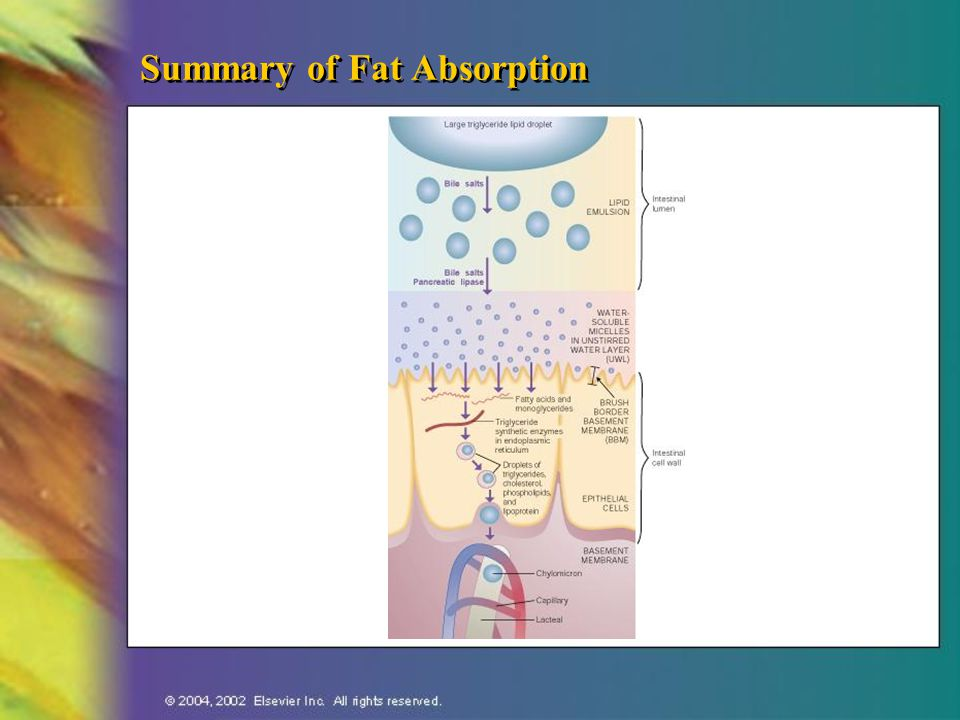 Summary of Fat Absorption
