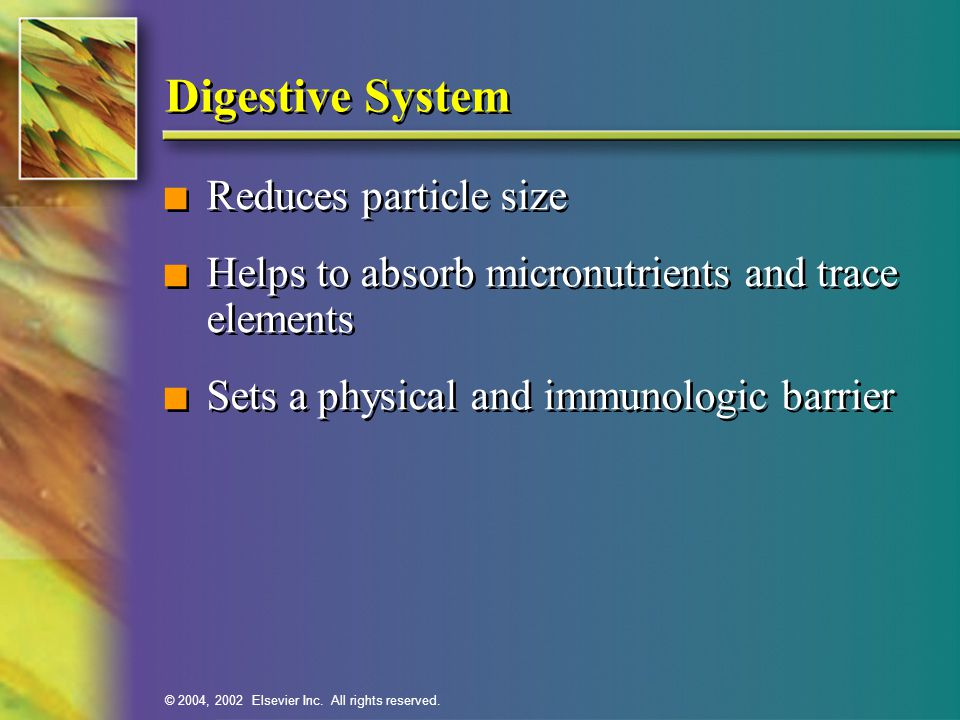 Digestive System Reduces particle size