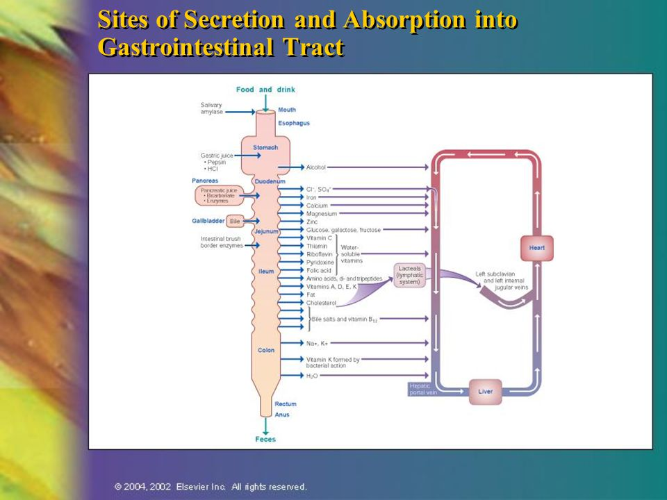 Sites of Secretion and Absorption into Gastrointestinal Tract