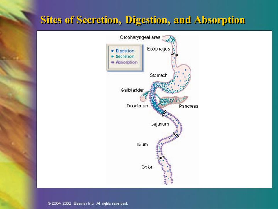 Sites of Secretion, Digestion, and Absorption