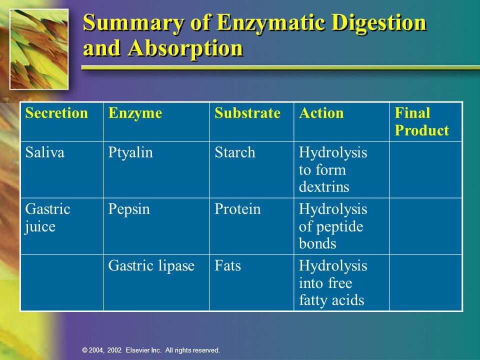 Summary of Enzymatic Digestion and Absorption