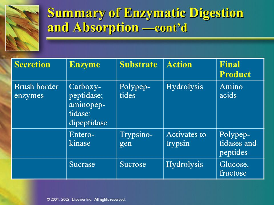Summary of Enzymatic Digestion and Absorption —cont'd