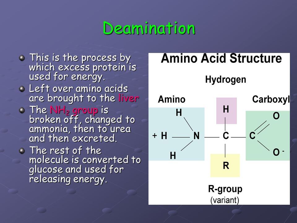 Deamination This is the process by which excess protein is used for energy. Left over amino acids are brought to the liver.