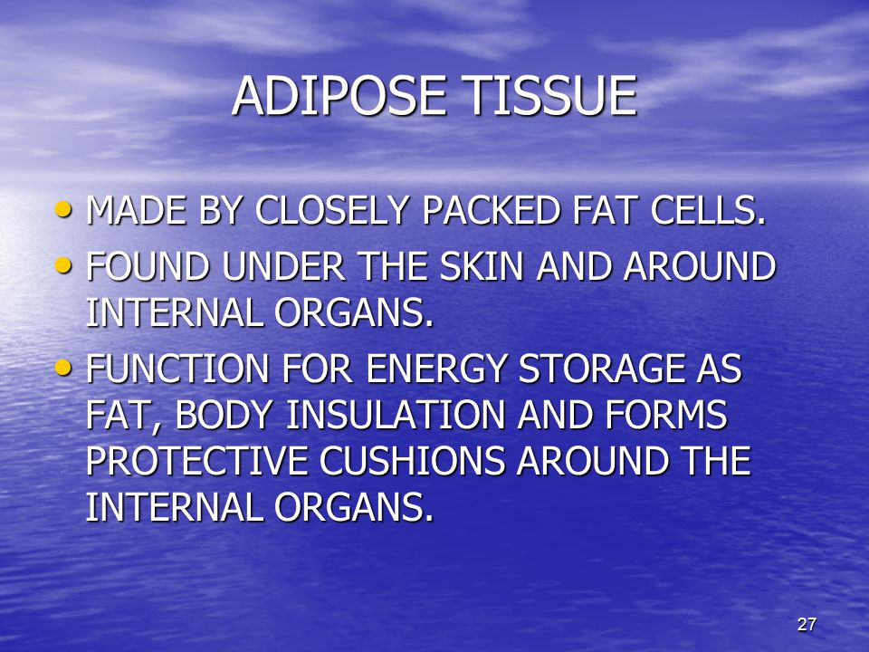 ADIPOSE TISSUE MADE BY CLOSELY PACKED FAT CELLS.