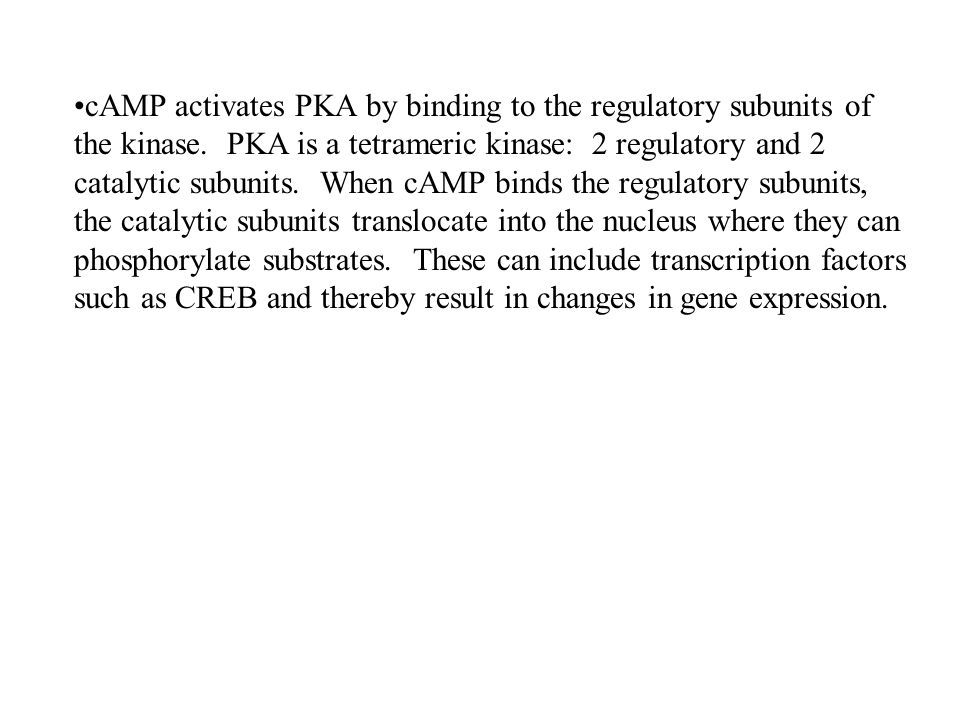 cAMP activates PKA by binding to the regulatory subunits of the kinase