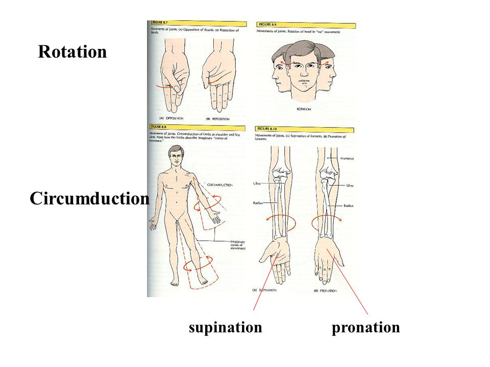 Rotation Circumduction supination pronation