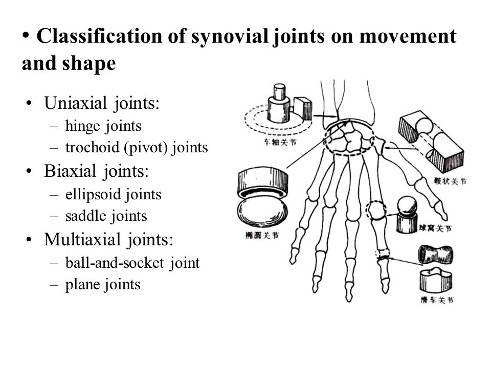 Classification of synovial joints on movement and shape