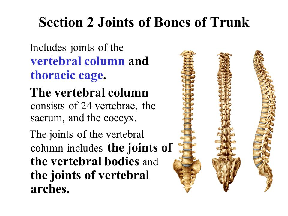 Section 2 Joints of Bones of Trunk