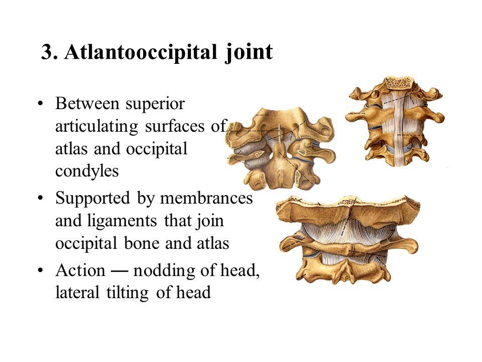 3. Atlantooccipital joint