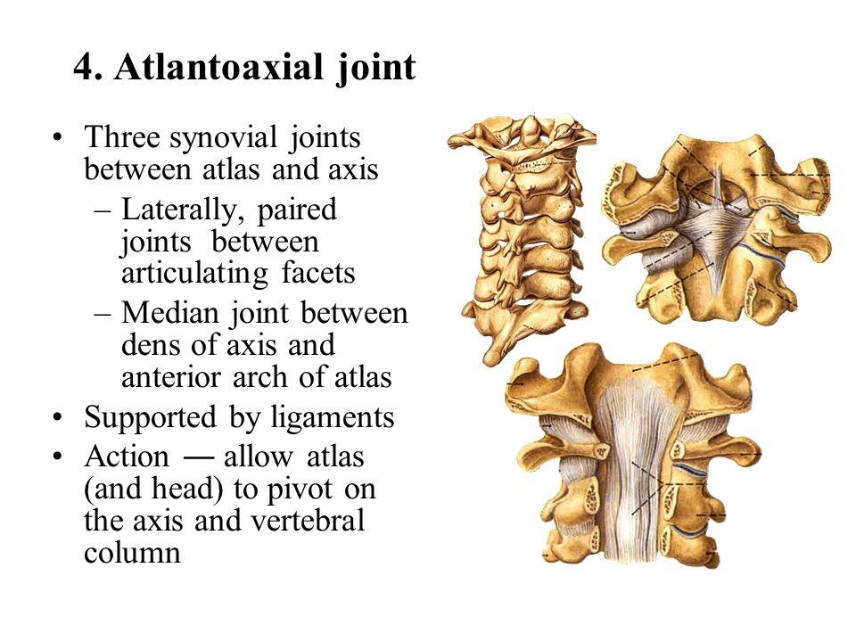 4. Atlantoaxial joint Three synovial joints between atlas and axis