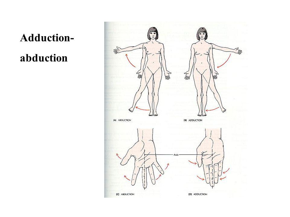 Adduction- abduction