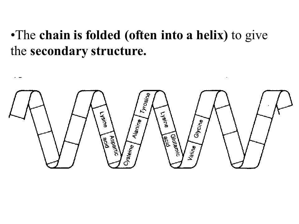 The chain is folded (often into a helix) to give the secondary structure.