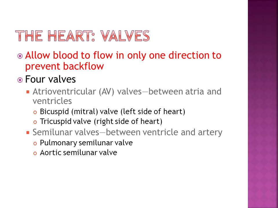 The Heart: Valves Allow blood to flow in only one direction to prevent backflow. Four valves.
