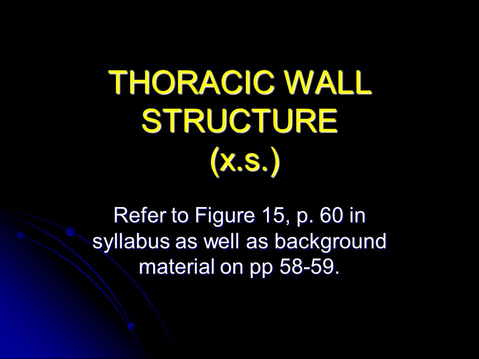 THORACIC WALL STRUCTURE (x.s.)
