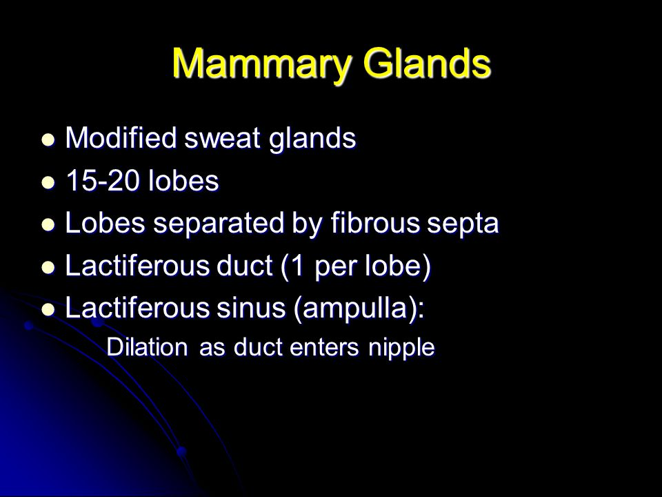 Mammary Glands Modified sweat glands 15-20 lobes