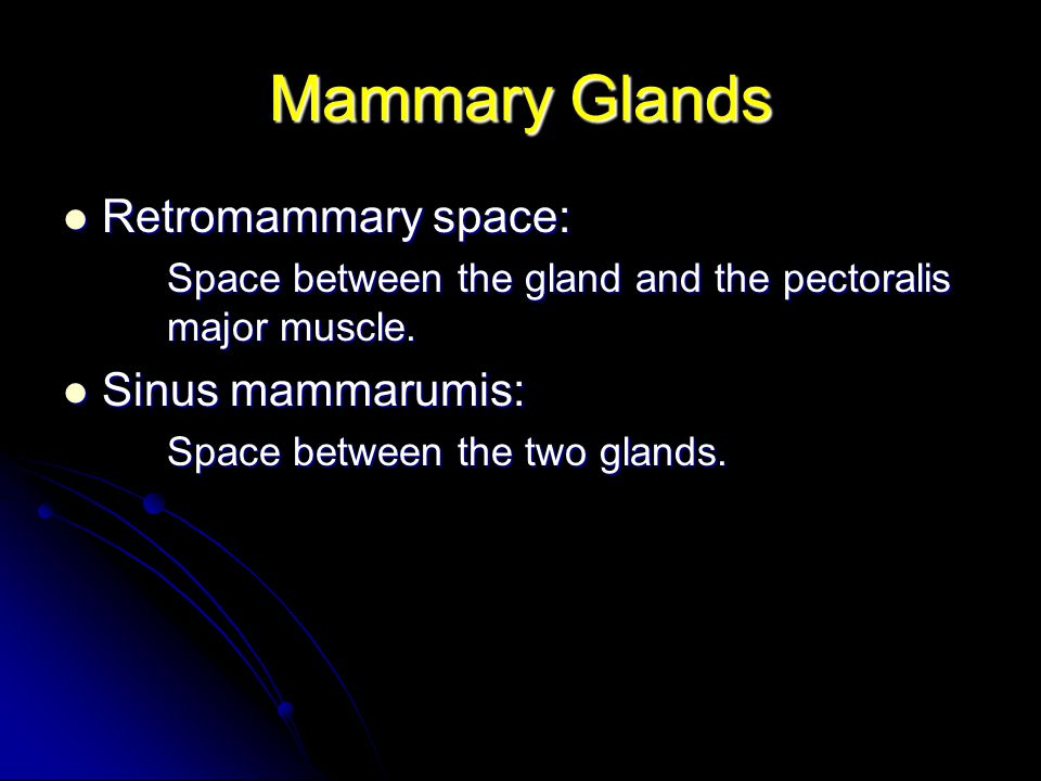 Mammary Glands Retromammary space: Sinus mammarumis: