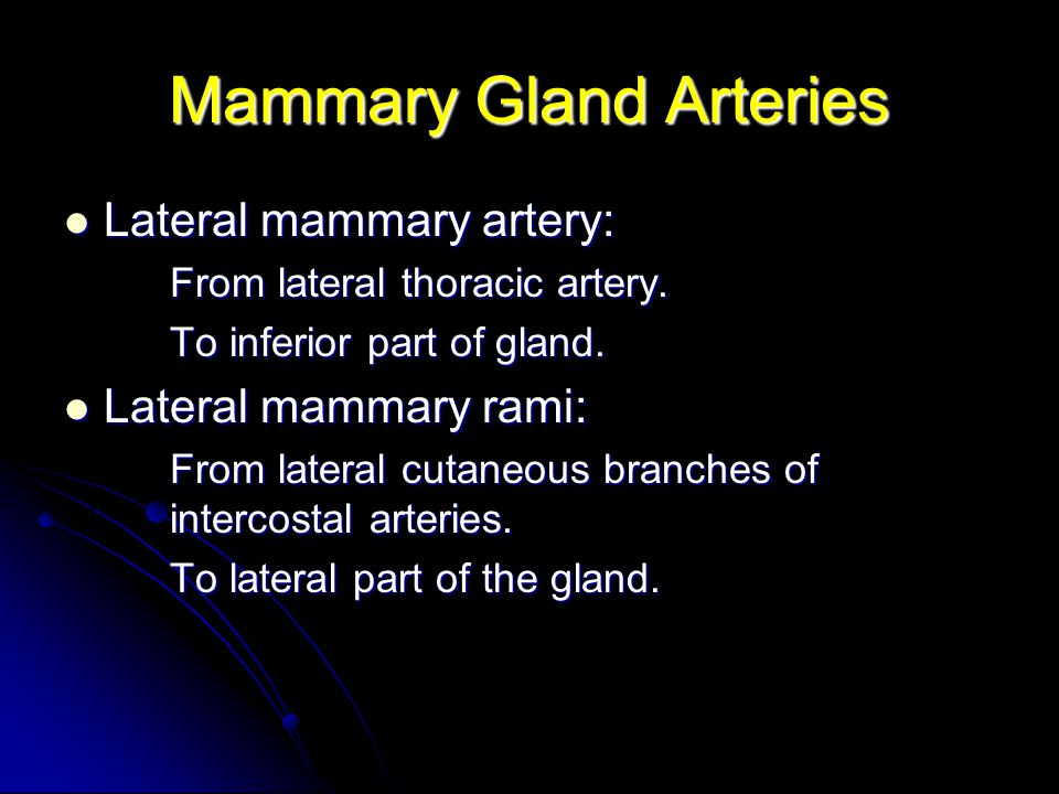 Mammary Gland Arteries