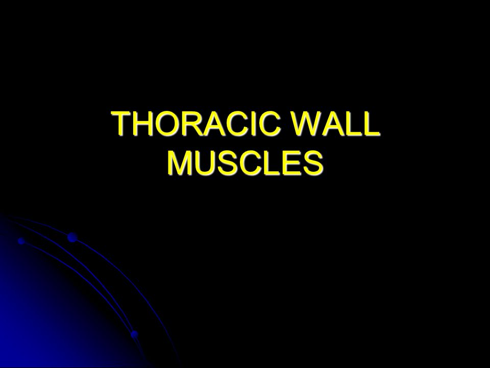 THORACIC WALL MUSCLES