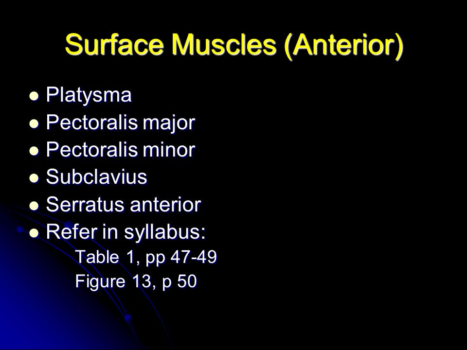 Surface Muscles (Anterior)