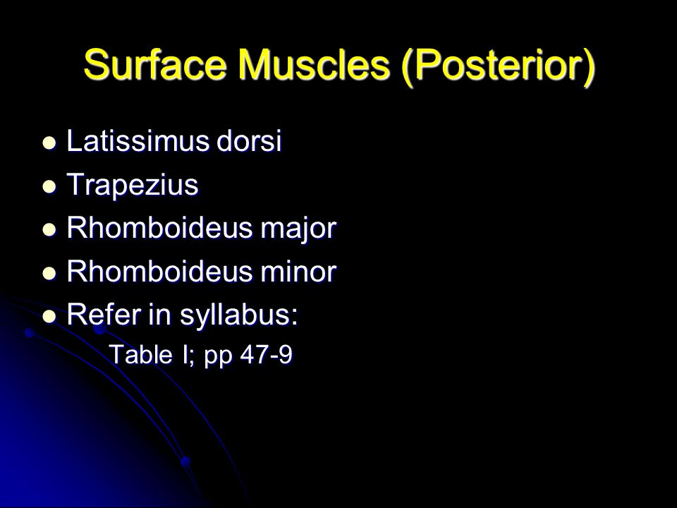 Surface Muscles (Posterior)