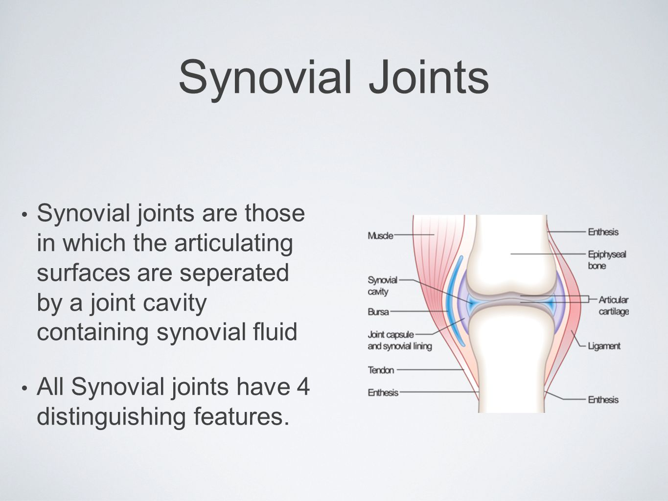 Synovial Joints Synovial joints are those in which the articulating surfaces are seperated by a joint cavity containing synovial fluid.