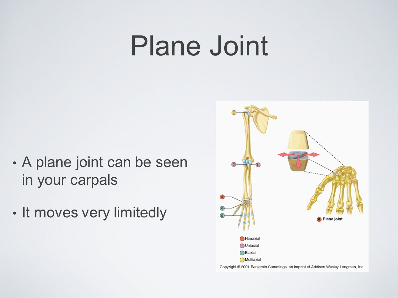 Plane Joint A plane joint can be seen in your carpals