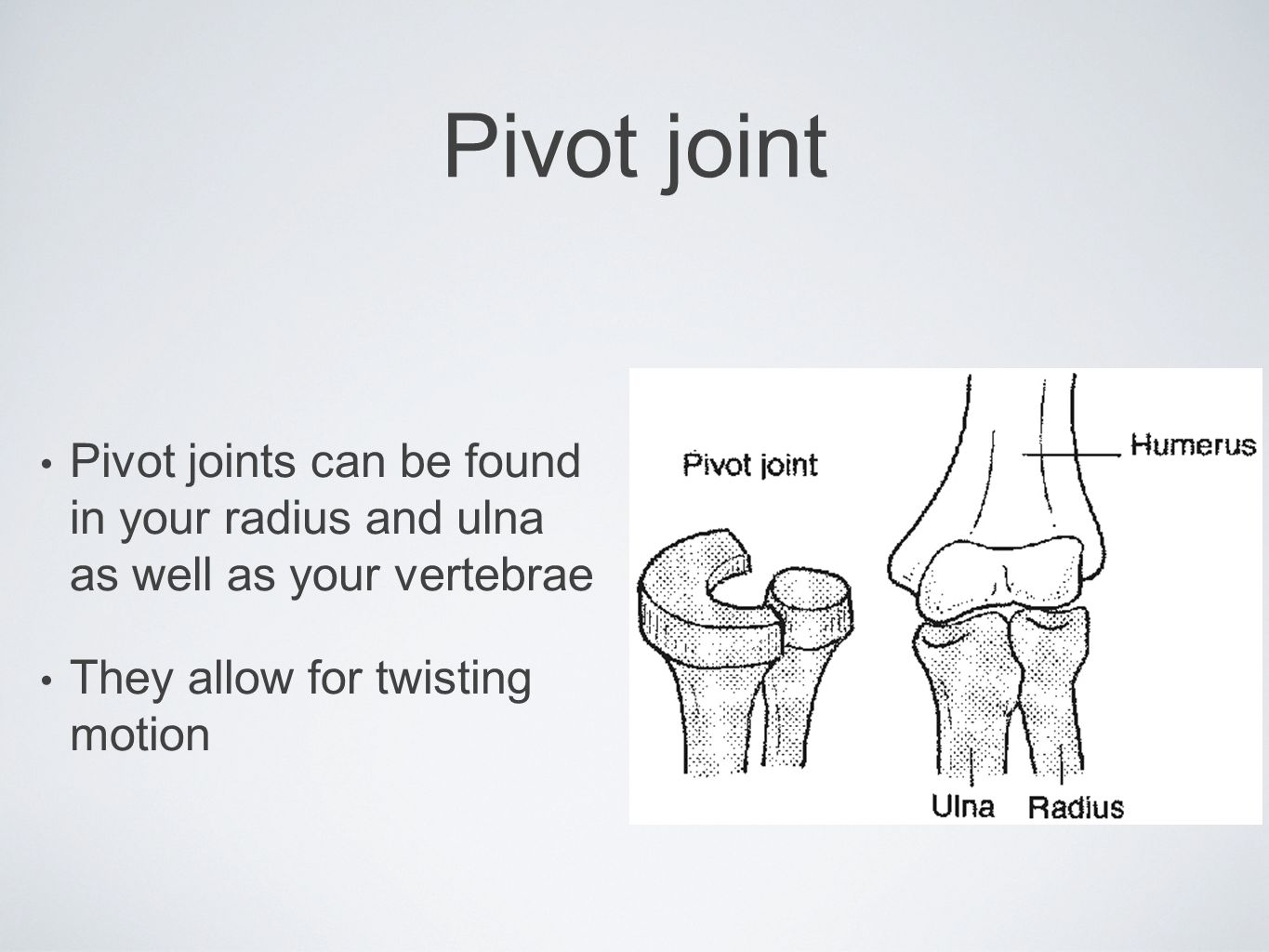 Pivot joint Pivot joints can be found in your radius and ulna as well as your vertebrae.