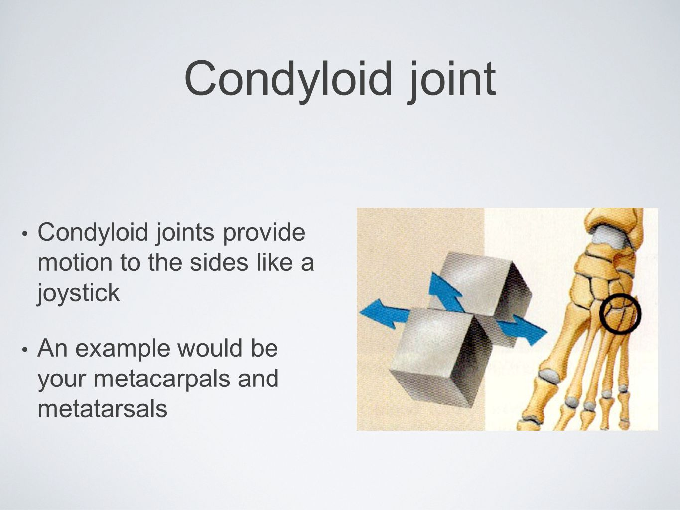 Condyloid joint Condyloid joints provide motion to the sides like a joystick.