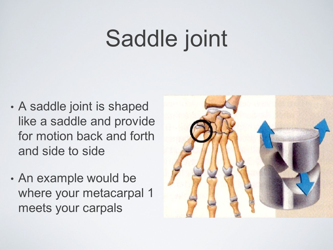 Saddle joint A saddle joint is shaped like a saddle and provide for motion back and forth and side to side.