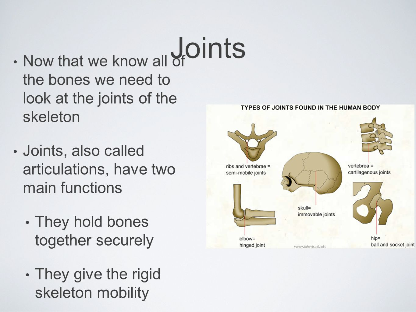 Joints Now that we know all of the bones we need to look at the joints of the skeleton.