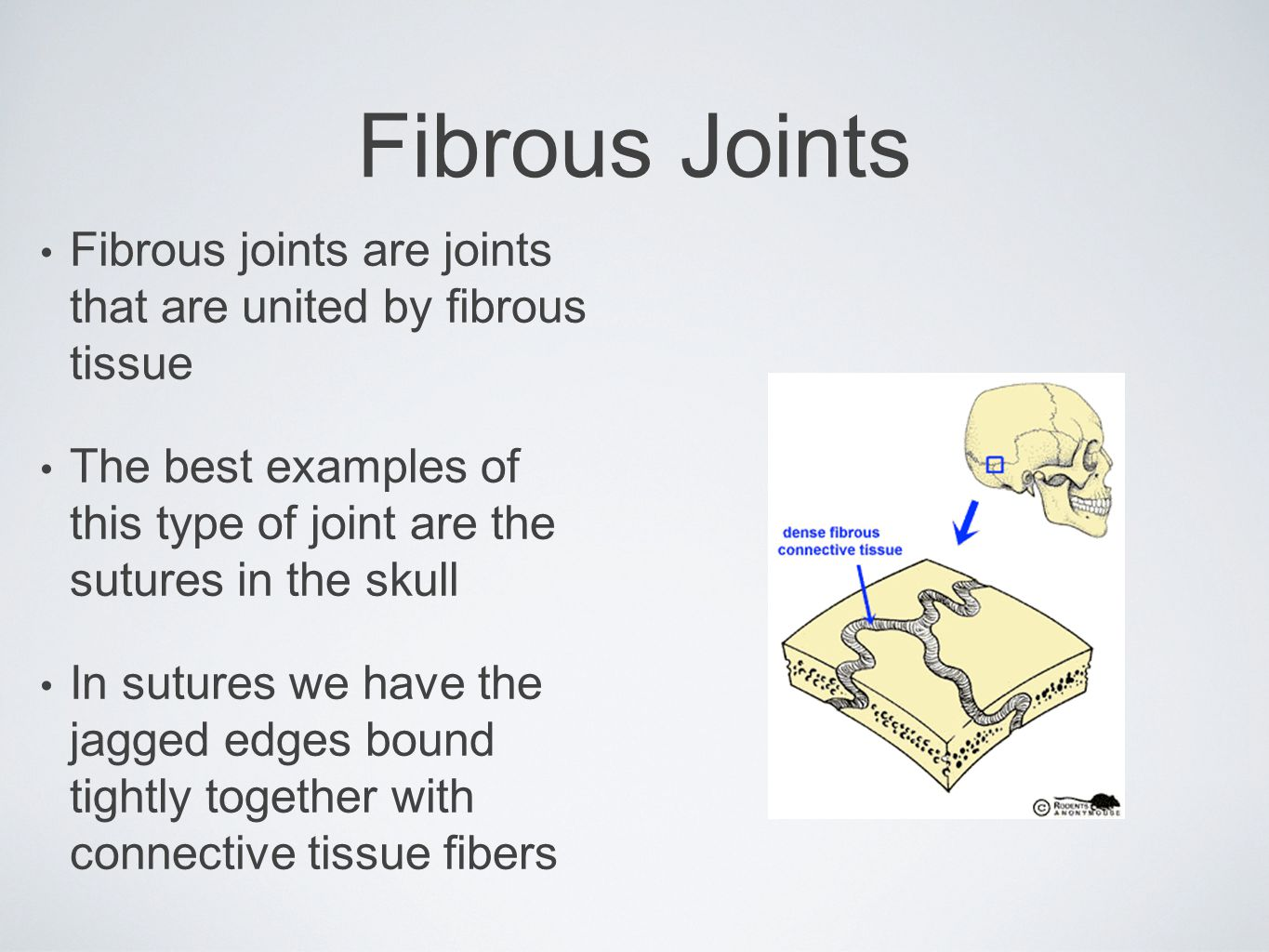 Fibrous Joints Fibrous joints are joints that are united by fibrous tissue. The best examples of this type of joint are the sutures in the skull.