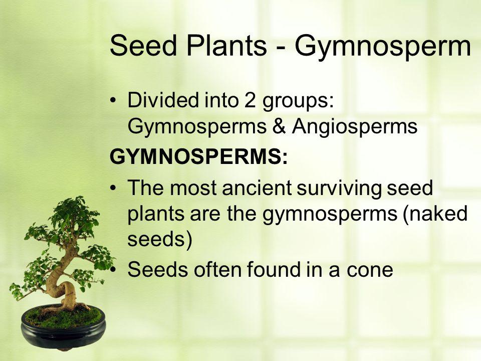 Seed Plants - Gymnosperm