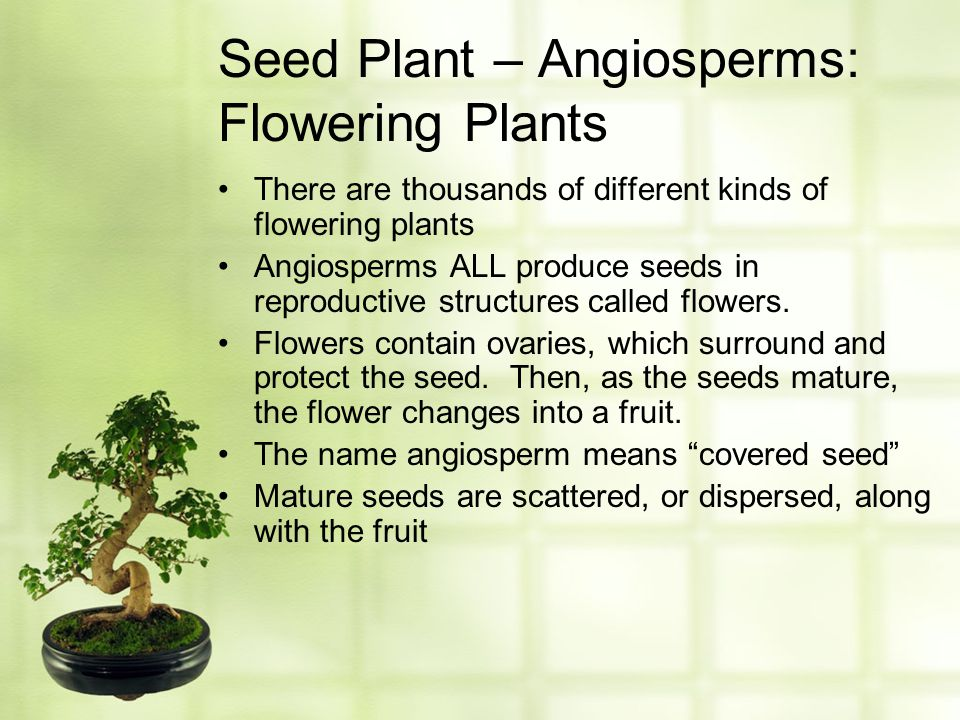 Seed Plant – Angiosperms: Flowering Plants