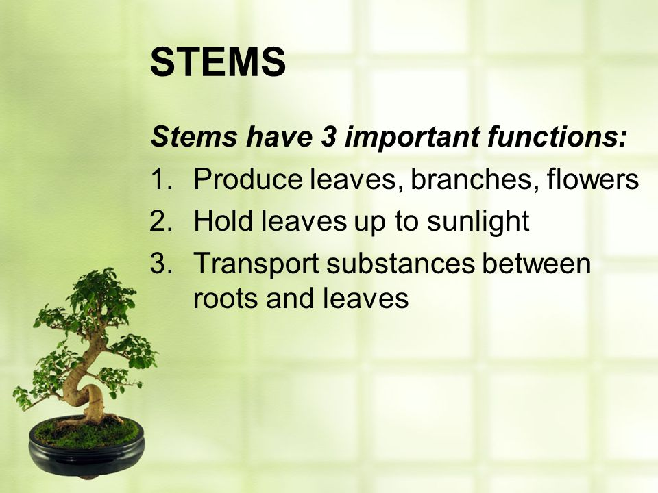 STEMS Stems have 3 important functions: