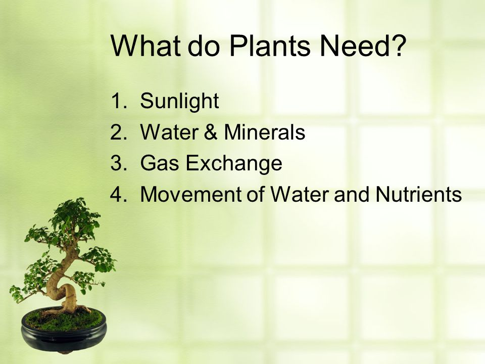 What do Plants Need 1. Sunlight 2. Water & Minerals 3. Gas Exchange