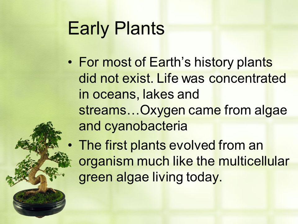 Early Plants