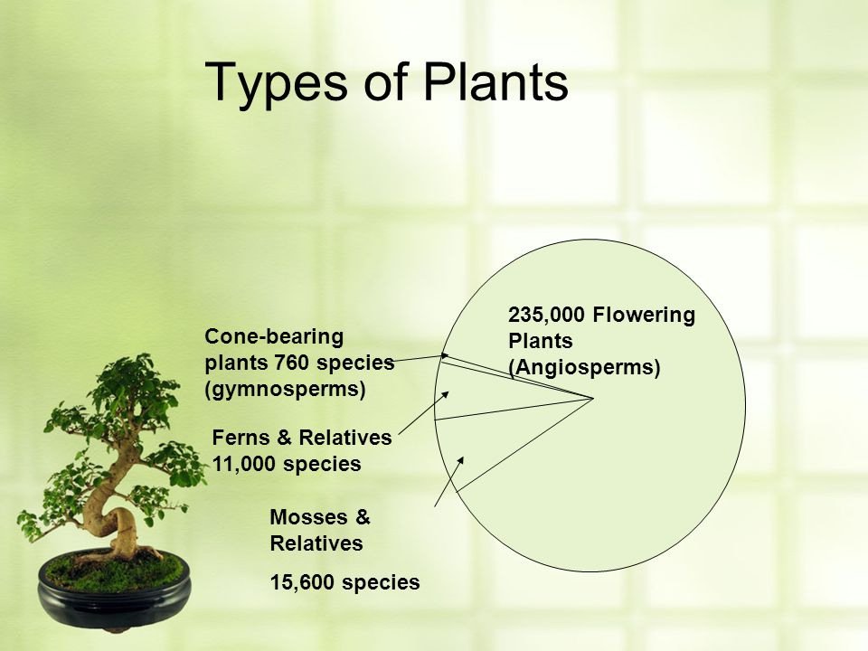 Types of Plants 235,000 Flowering Plants (Angiosperms)