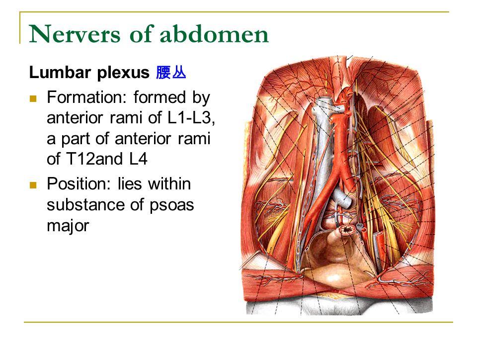 Nervers of abdomen Lumbar plexus 腰丛