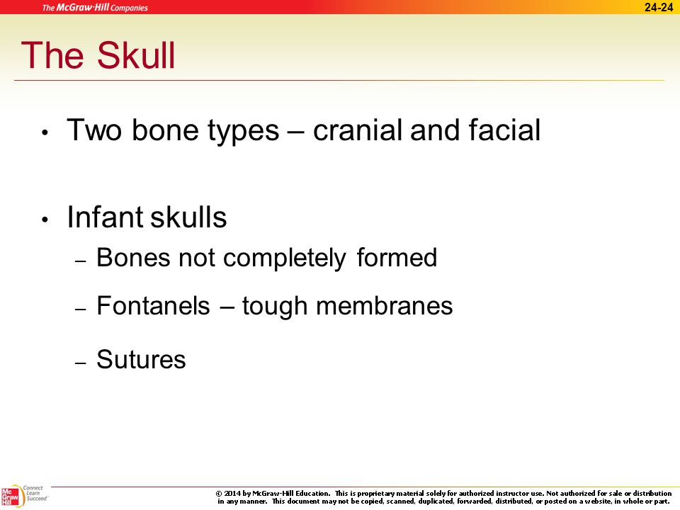 The Skull Two bone types – cranial and facial Infant skulls